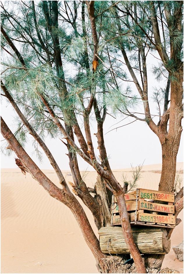 Trees in the Sahara Desert