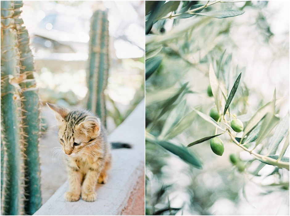 Diptych of kitten and plants in Morocco